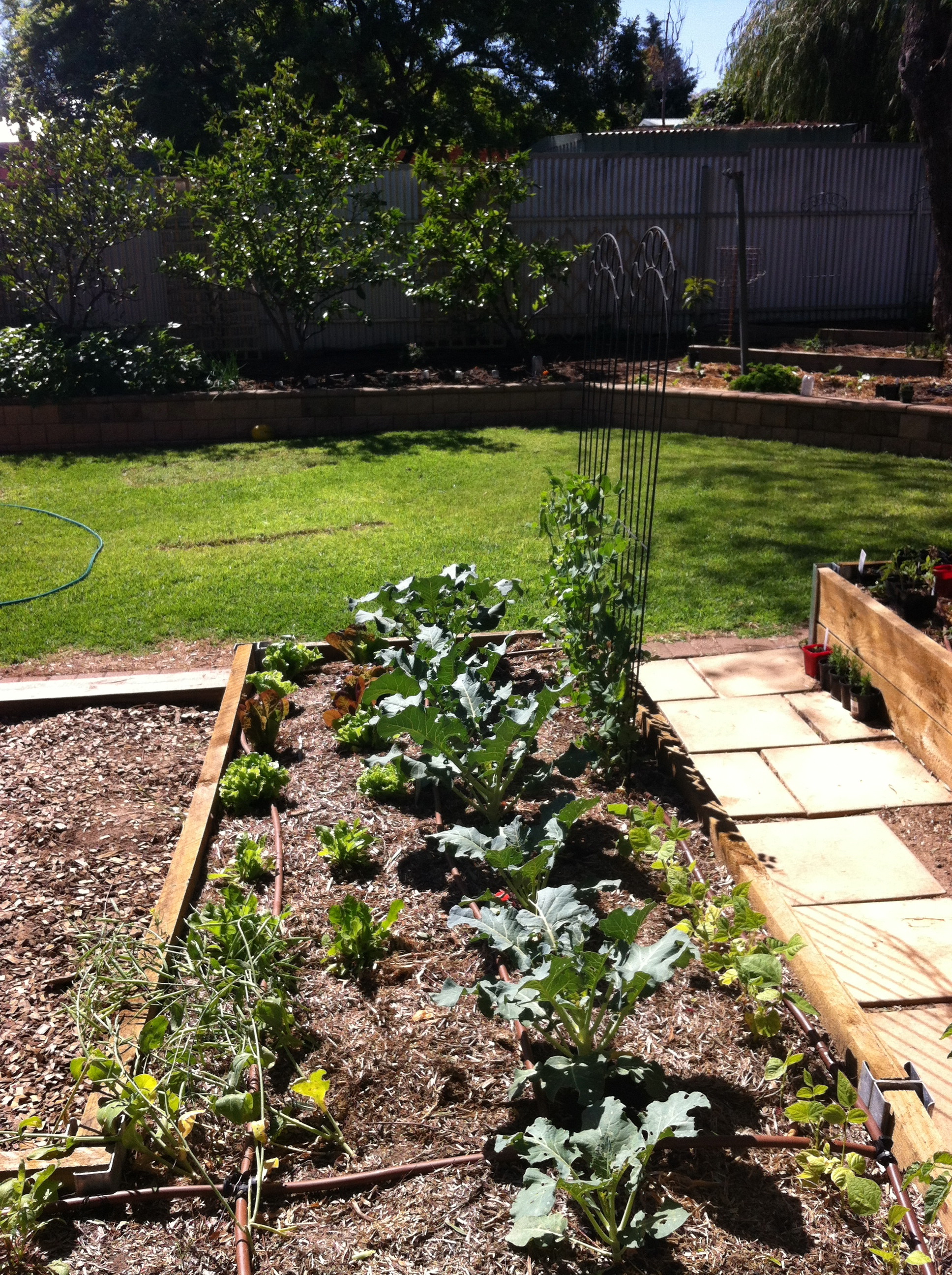 Welcome to Our Backyard Farm! | Pete's Backyard Farm